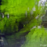 Reflectie blad Monet tuin