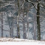 Verse sneeuwval