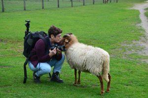 schapenfluisteraar