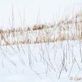 Stro in de sneeuw