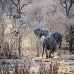 Ethosa NP Namibië
